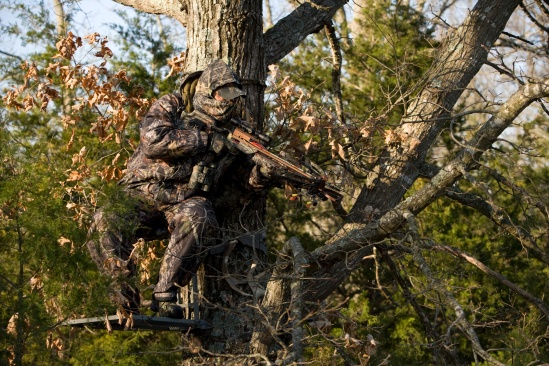 crossbow-hunter-up-a-tree