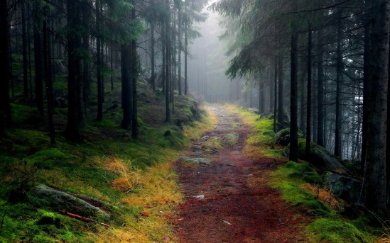 Path-through-foggy-mountain-forest