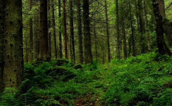 Romanian_forest_by_Lor1en